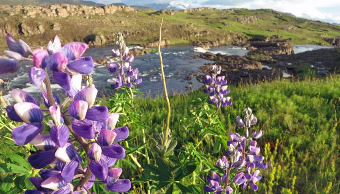 13_Island_Trollfoss_700