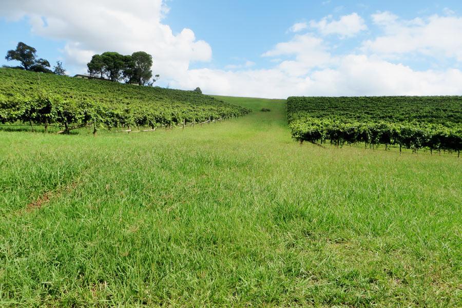 Weinregion in Australien