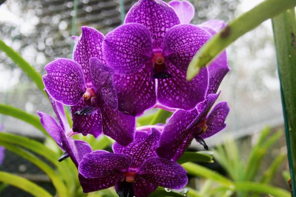 barbados_orchideengarten_interessante-orte_kofferpacken-at
