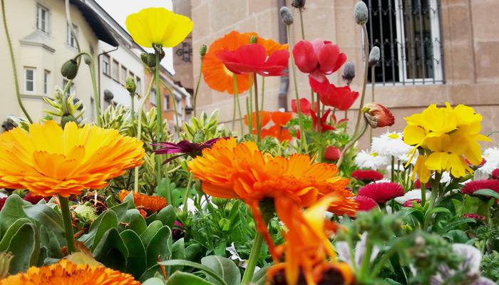 Frühling in Bozen, Italien