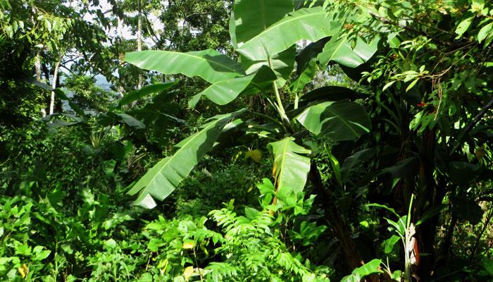 Üppiger Garten in Costa Rica