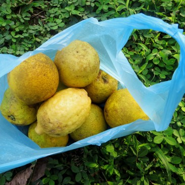 Costa-Rica_Castia-Azul_Orangen_700_700