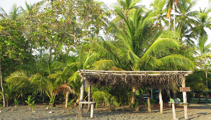 Matapalo in Costa Rica