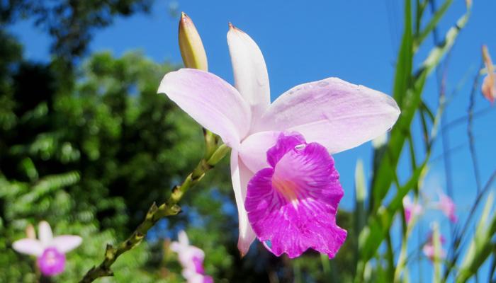Orchidee im tropischen Regenwald