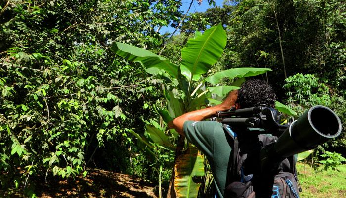 Tour durch den Regenwald