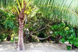 Palmen auf den Fidschi Inseln