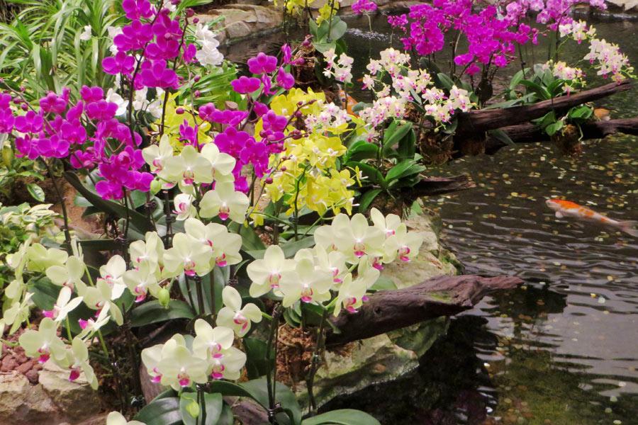 Orchideengarten im Flughafen Singapur