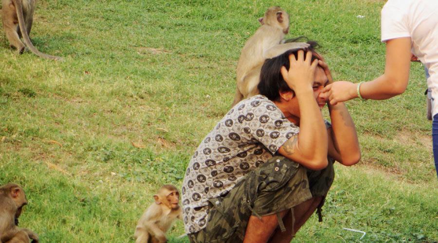 Die Affen belagern auch die Touristen in Lopburi.