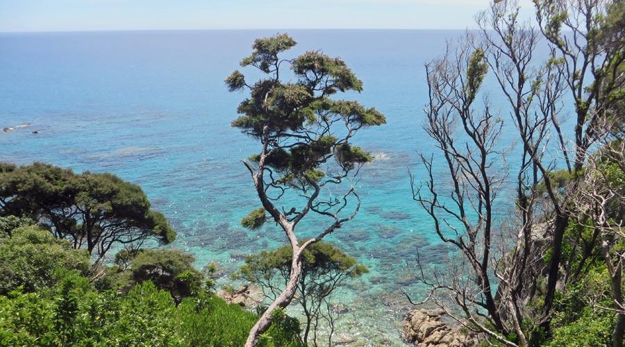 Neuseeland: Abel Tasman Track