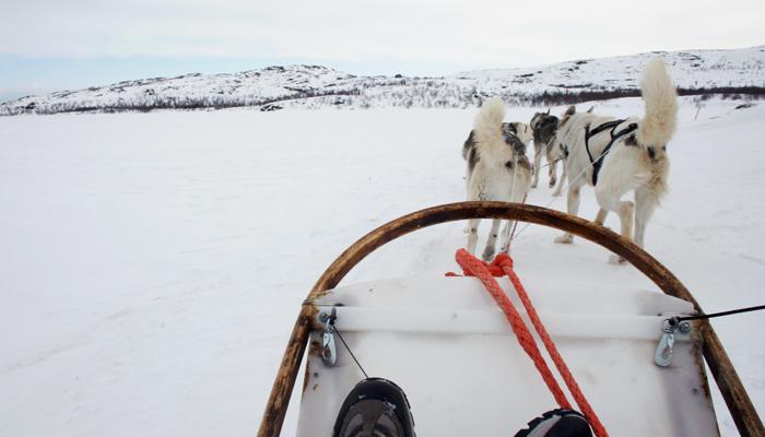 Schlittenhunde in Kirkenes