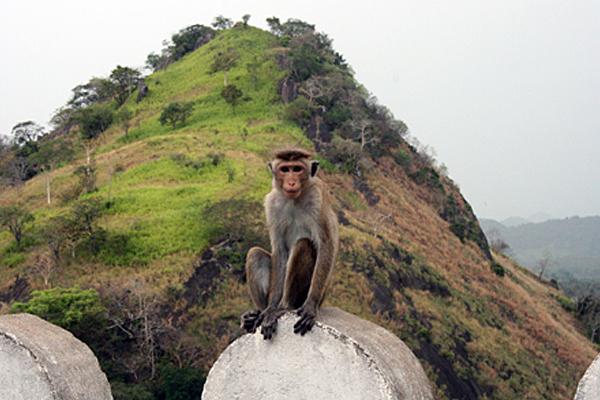 Auch die Affen wissen die Kulturstätte zu schätzen.
