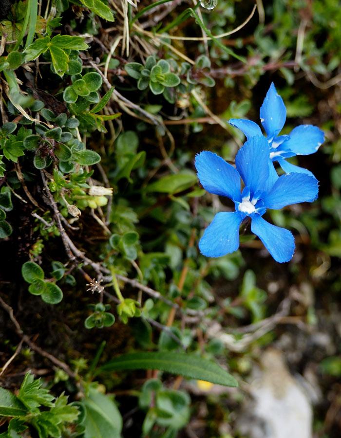 Nature Watch Tour mit Swarovski Optik_Blumen aus nächster Nähe