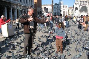 Die Tauben am Markusplatz trotzen den Saisone - sie sind immer da und werden von den Touristen reichlich gefüttert.
