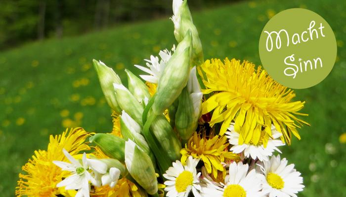 Wiesenkräuter bestimmen in Bergheim