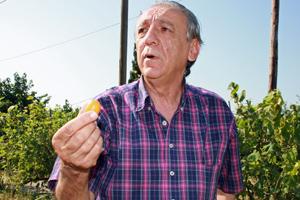 Kumquatsproduzent in Griechenland