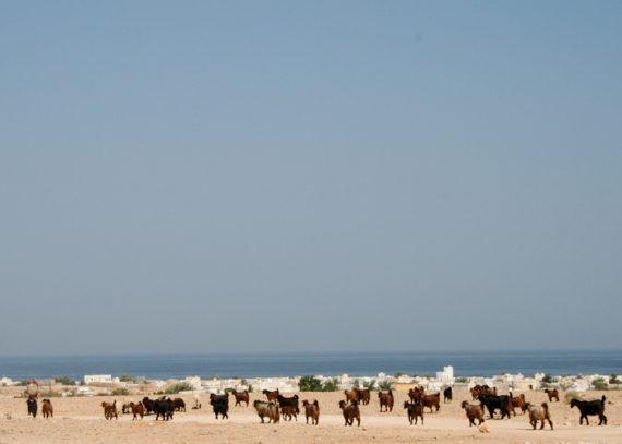 Reise in den Oman