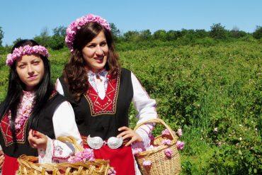 Rosenbluete in Bulgarien