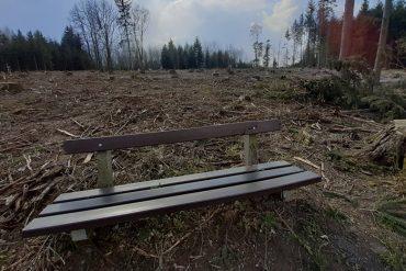 Gedanken aus dem Wald zur Corona-Krise