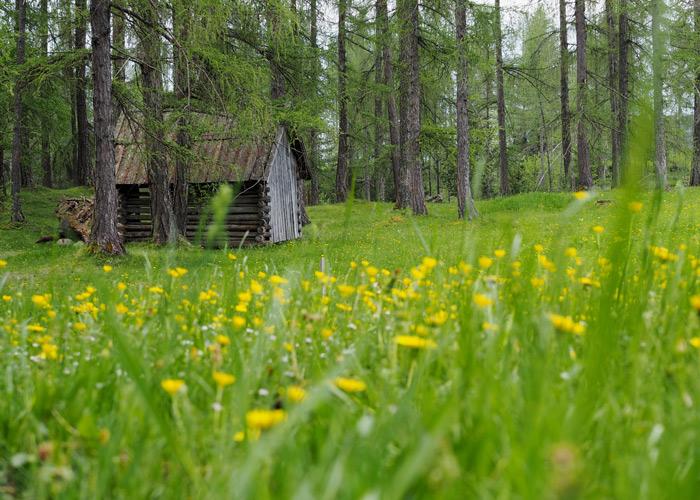 Die Larchwiesen am Mieminger Plateau