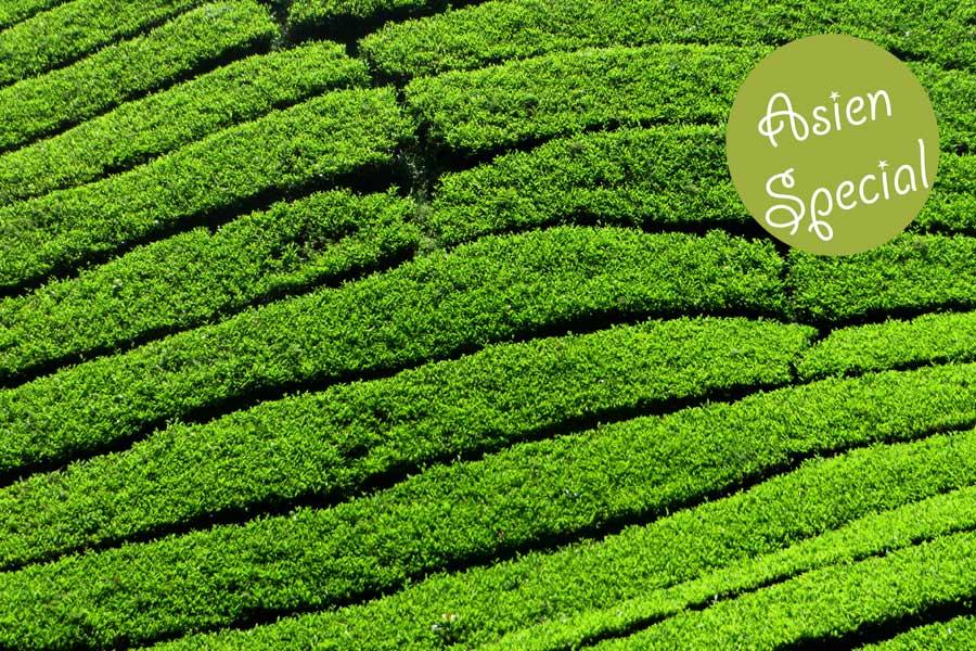 Teeplantage in den Cameron Highlands, Malaysia.