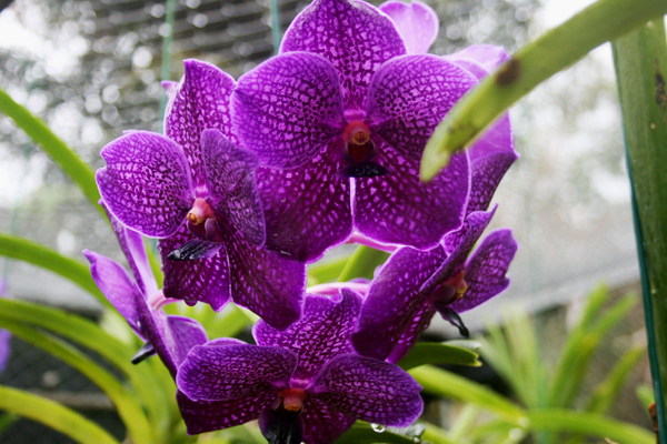 barbados_orchideengarten_interessante-orte_kofferpacken-at