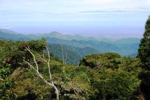 uf dem Gunung Jasar auf 1.696 Metern Höhe genießt man einen weiten Blick über die sanften Hügel der Teeanbaugegend.