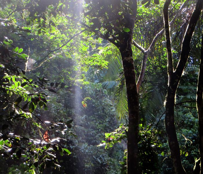 Esquinas Regenwald