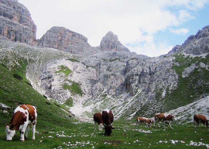 Familienurlaub mit Kindern in den Dolomiten in Südtirol_Kuhweide