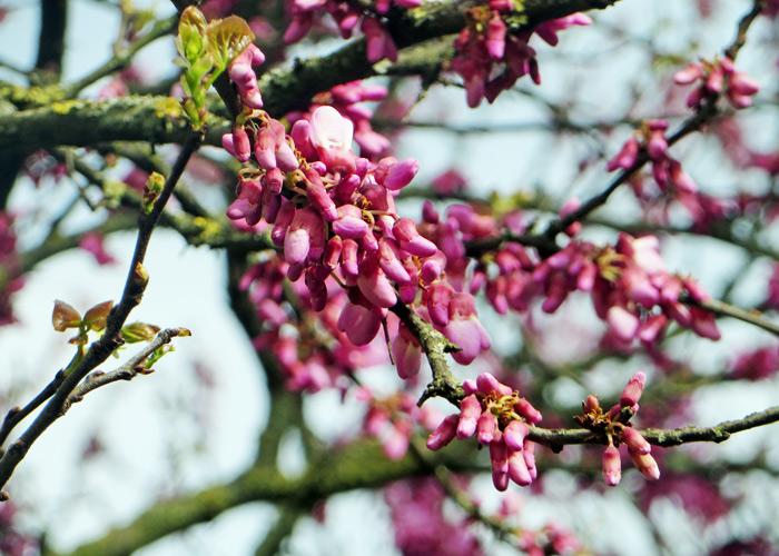 Blüten in Bologna