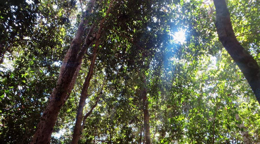 Dschungel auf Koh Bu Bu, Thailand