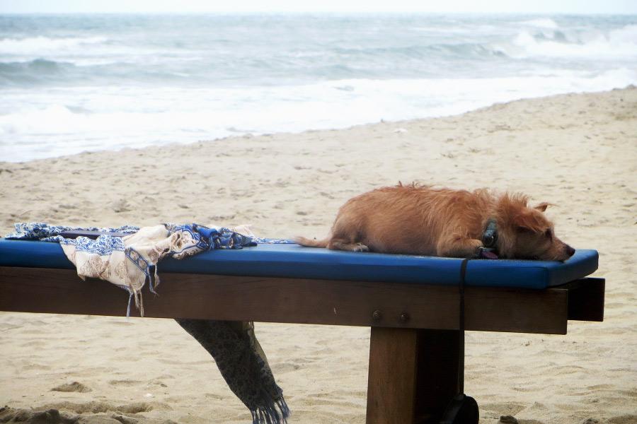 Langzeitreisen: am Strand dösender Hund.