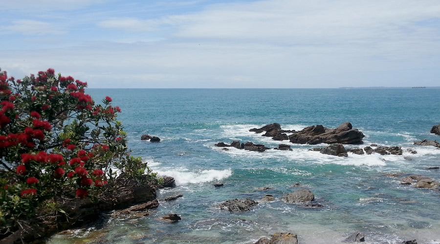 Auswandern Neuseeland Erfahrungsbericht