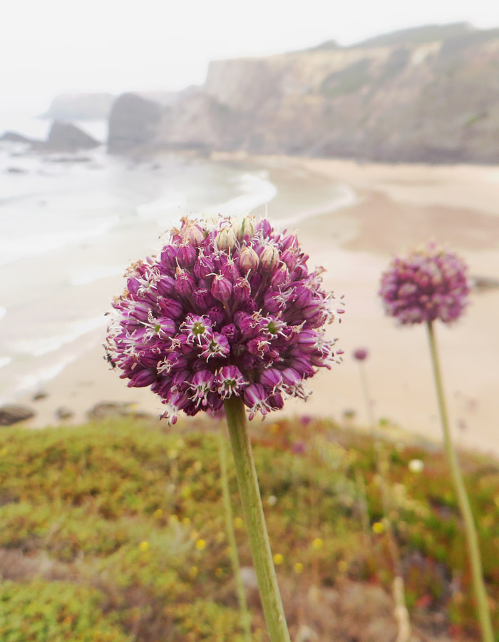 Herrliche Ausblicke auf Strand und Meer beim Küstenwandern in Portugal