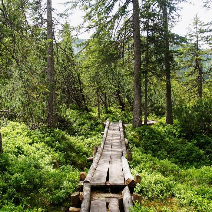 Salzkammergut BergeSeen Trail_Weitwanderweg in Österreich_Holzpfad