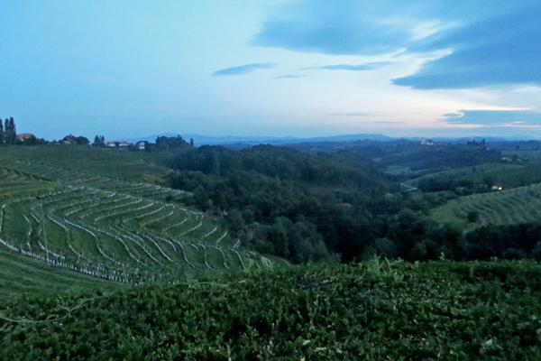 Weinregion Jeruzalem in Slowenien