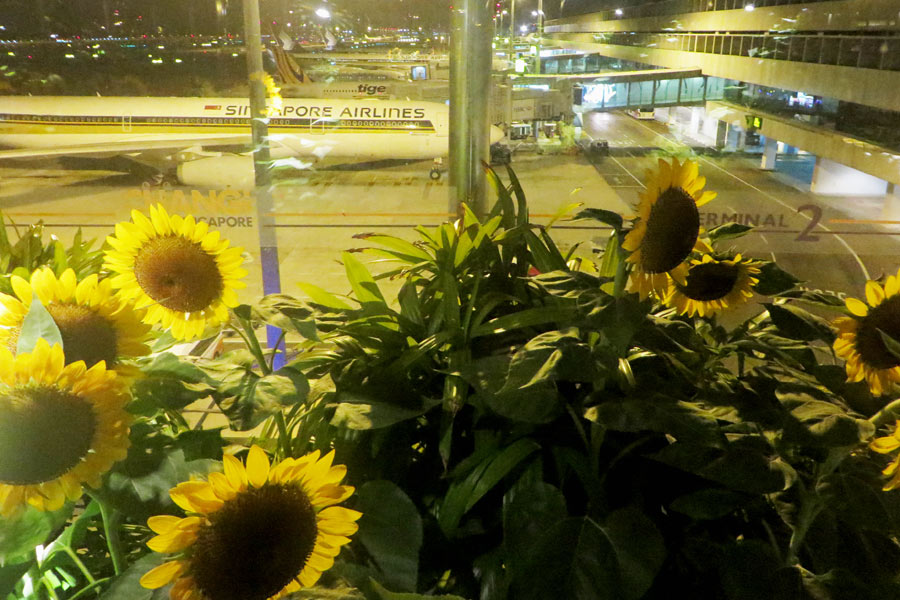 Sonneblumen-Terrasse am Flughafen Singapur.