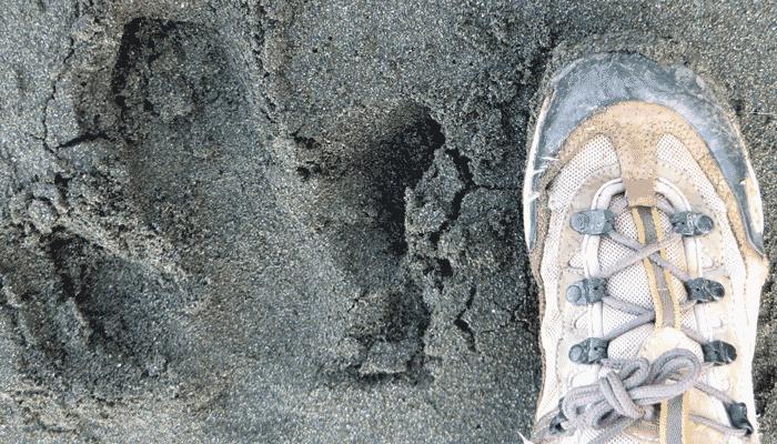 Tapir Fußbadruck Costa Rica