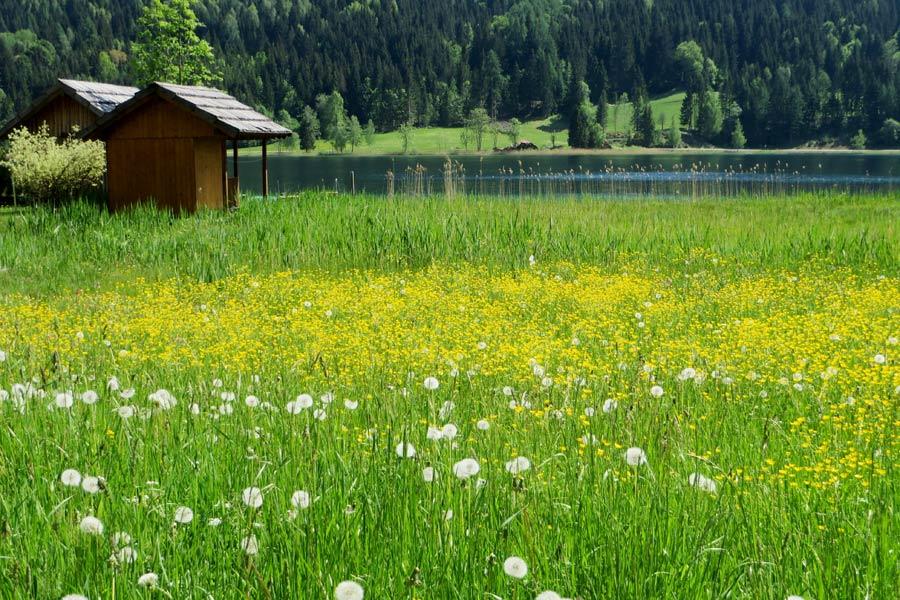 Blühende Wiese am Weissensee in Kärnten.