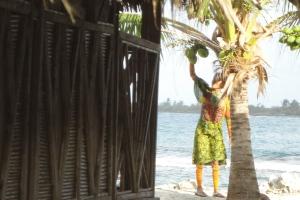 Frisches Kokoswasser aus den Kokosnüssen gleich hinter der Hütte? Auf San Blás kein Problem!